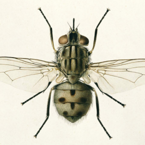 Короткая и мудрая притча о пчеле и мухе