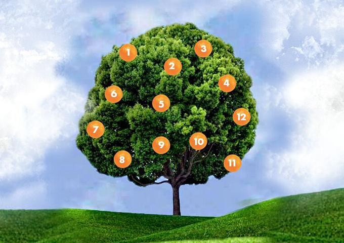 Дерево желаний: загадайте желание, выберите фрукт и узнайте, что вас ждет