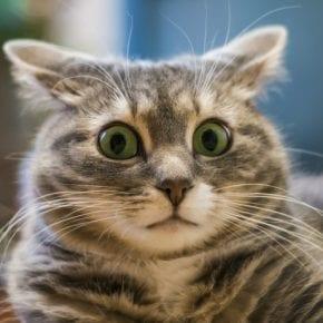 Как определить присутствие негативной энергетики в доме с помощью кошки