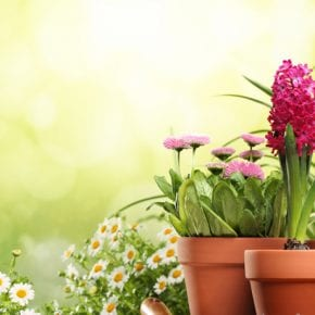 Растения-талисманы, которые защищают дом от всех невзгод