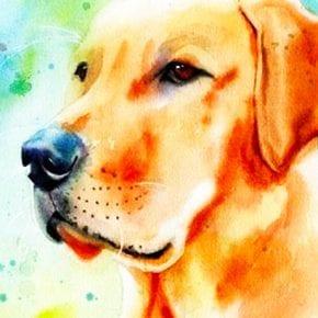 Вот, кому Желтая Собака принесет счастье по восточному знаку Зодиака!