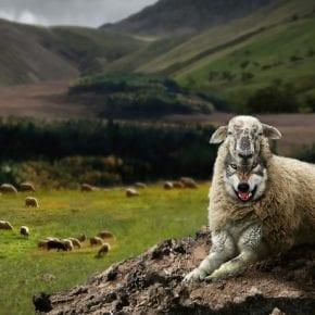 Как вычислить волка в овечьей шкуре