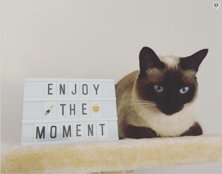 Каких кошек стоит завести в этом году разным знакам Зодиака