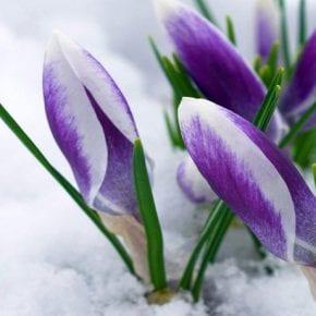 Нумерологический прогноз для рожденных 15-го марта