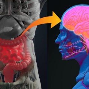 Кишечник — ваш второй мозг и его можно исцелить