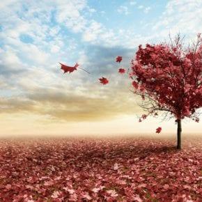 Любовь — деликатное искусство