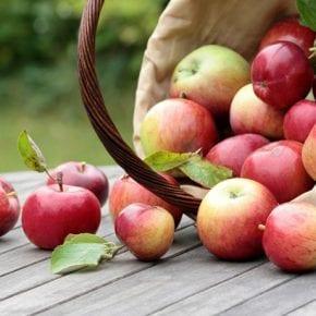 19 августа Яблочный Спас: что можно делать и что нельзя