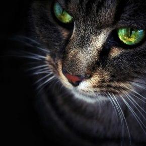Кошка – магический питомец, который защищает вас и ваш дом от негативной энергии