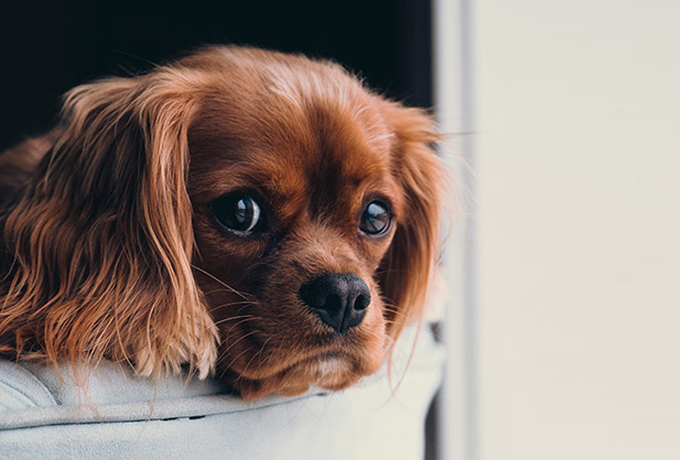 Как собаки чувствуют плохих людей?