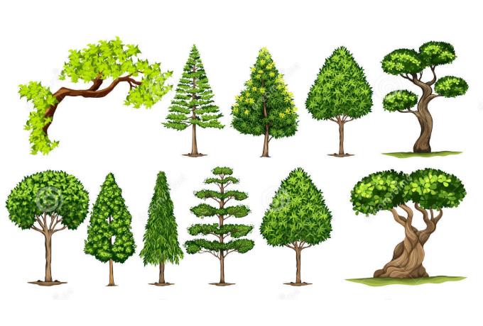 Какое дерево является вашим духовным символом в соответствии с вашим днем рождения