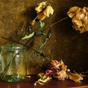 Растения, разрушающие семейное счастье