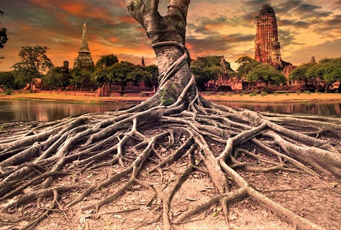 Деревья – это природные целители! Вот как вы можете использовать их энергию