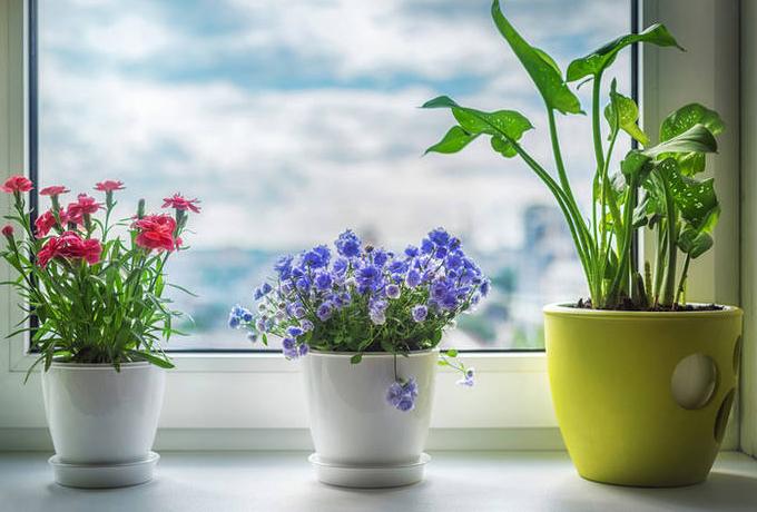 Комнатные растения по знаку Зодиака. Выбираем счастливый талисман