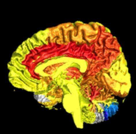 Женщины используют свой мозг гораздо активнее мужчин — научно доказано
