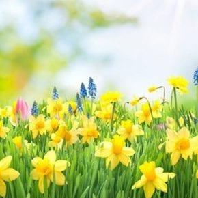Нумерологический прогноз для рожденных 3-го апреля