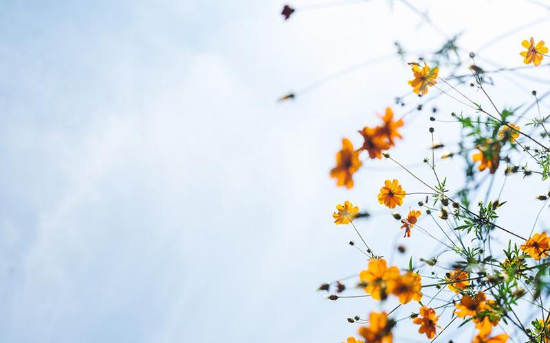 6 удивительных цитат, которые помогут справиться со стрессом и тревогой