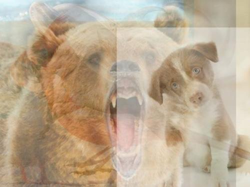 Животные, которых вы увидите на этом изображении, многое расскажут о вашей личности