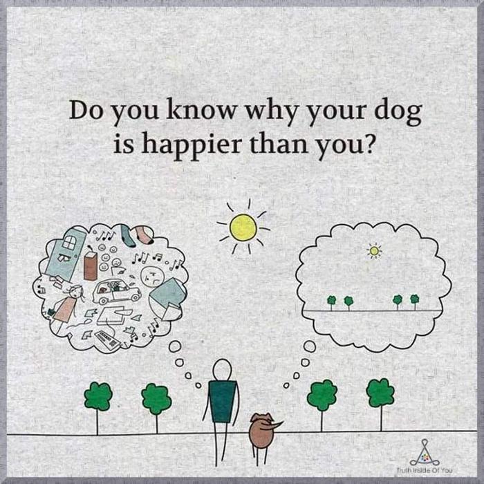 Знаете ли вы, почему ваша собака счастливее вас?
