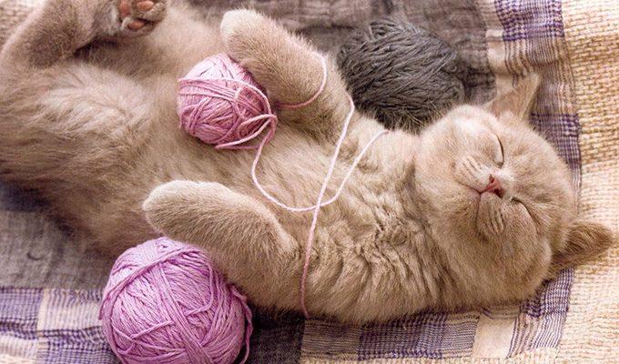 Как кошки поглощают и нейтрализуют негативную энергию