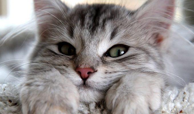 Кошки — это природные эмпаты, способные исцелить ваши разум, тело и душу