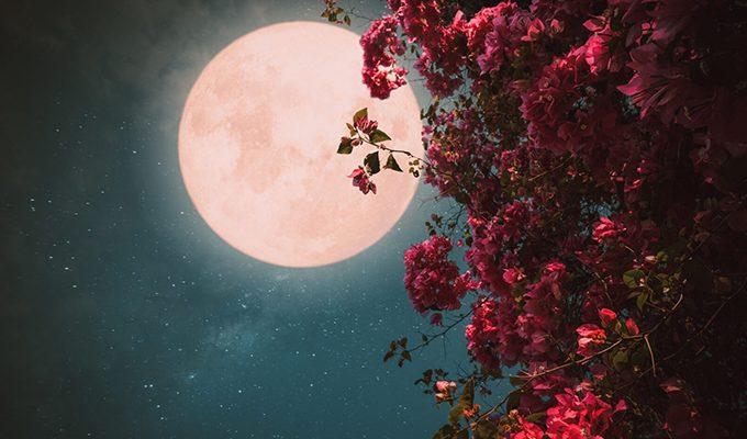 26 мая 2021 года — мощное цветочное Полнолуние, открывающее коридор важных трансформаций
