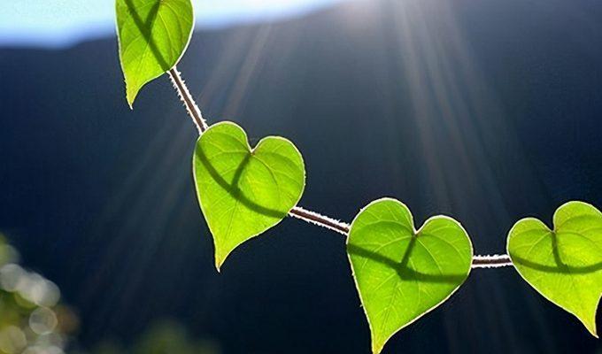 4 знака Зодиака, которые принимают все слишком близко к сердцу